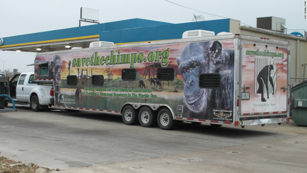 The specially designed trailer that carries the chimps -- a moving billboard for Save the Chimps -- has windows allowing the chimpanzees to see out and the public to see in, says the group's sanctuary director, Jen Feuerstein.  The chimpanzees are often heard banging and hollering before they are seen through the tinted windows.