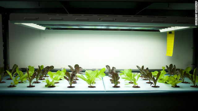 Lettuce plants fed by waste water from the next door fish tank grow under low-energy strip lights in London's FARM:shop
