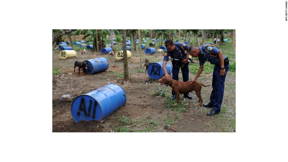 PAWS teme que los perros terminen nuevamente en las peleas clandestinas.