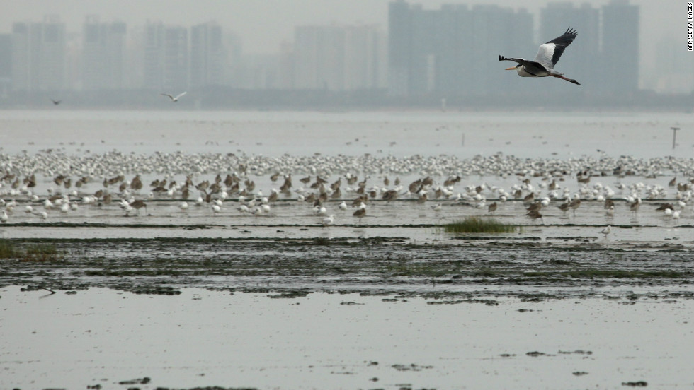 Wetlands within the border area are an important seasonal staging post for migratory birds.