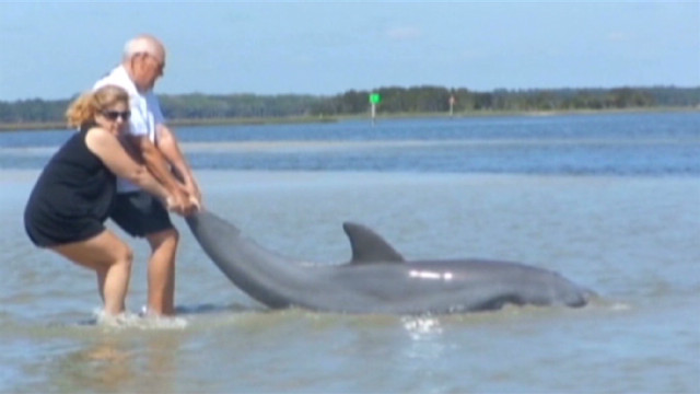 Family pulls stranded dolphin to safety