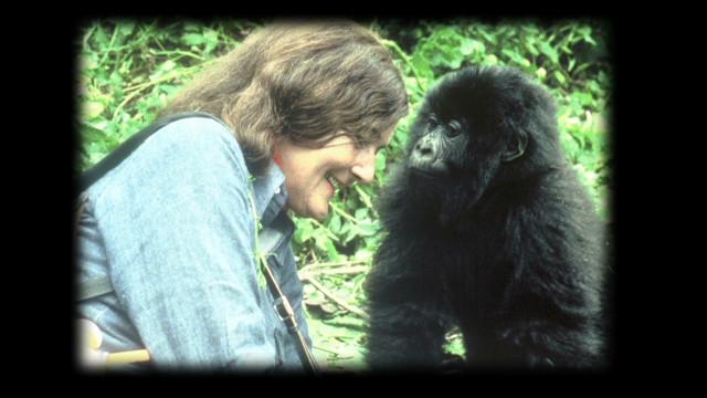 Protecting Rwanda's gorillas