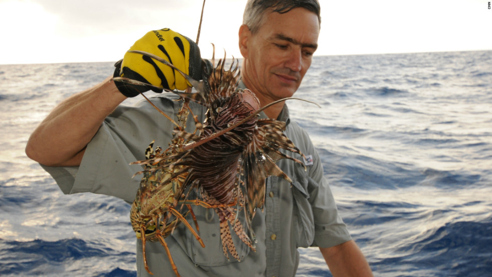 Florida's fisherman are catching more and more each year in their lobster traps.