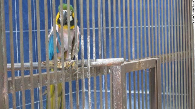 Animals suffer amid delays over Indonesia zoo rescue - CNN.com