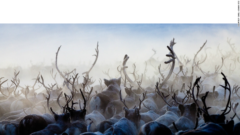 Lapland didn't get its Santa Claus association without good reason. Whatever time of year you arrive, large herds of reindeer are rarely far from view.
