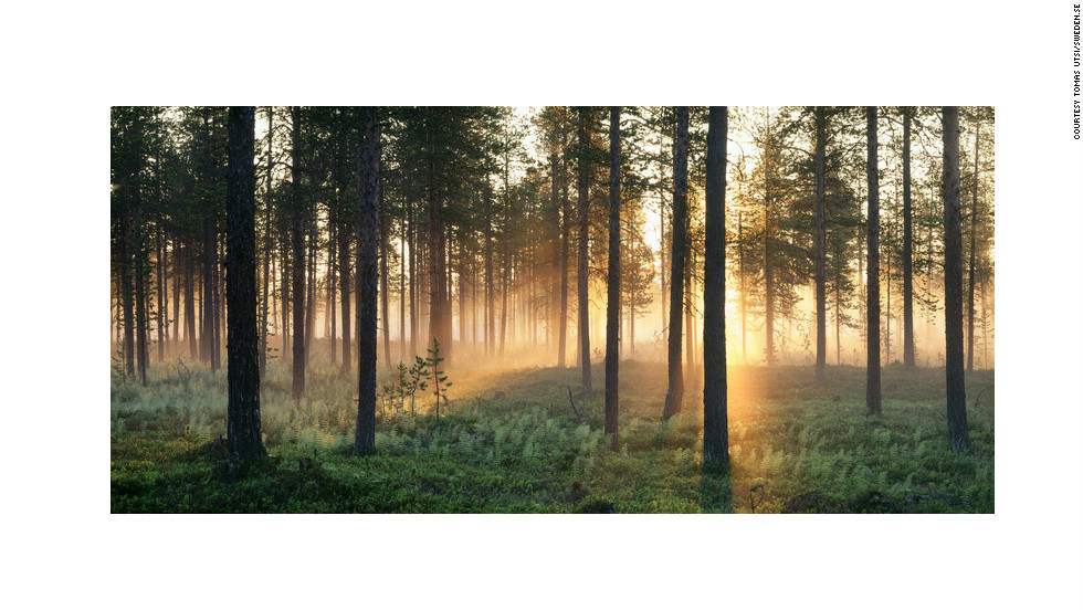 The dim pinkish light of the midnight sun illuminates the forest in Paksuniemi, north Sweden. The midnight sun is a natural phenomenon occurring in summer months at latitudes north of the Arctic Circle, where the sun remains visible 24 hours a day.