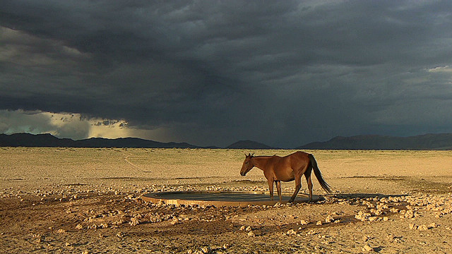 The wild horses of the Namib
