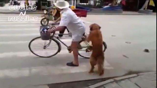 china.dog.bike.guardian.vo_00001302