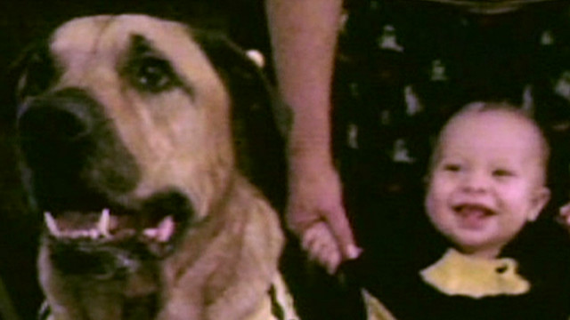 hln dog mauls baby on birthday_00022417