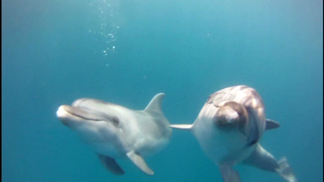 Dolphins rescued from filthy pool