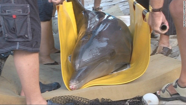 Both dolphins were in failing health when wildlife activists discovered them at a run-down tourist park in 2010.