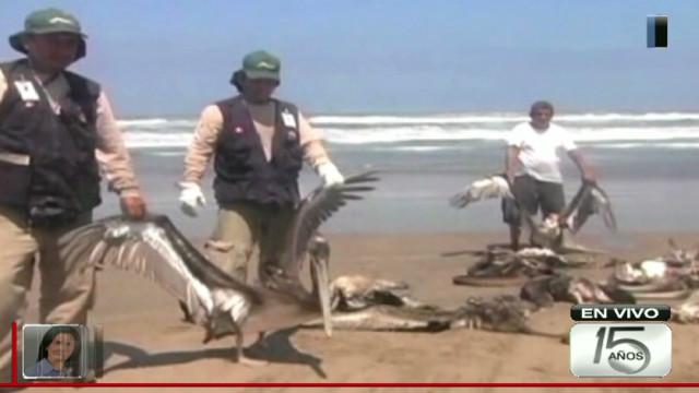 act.belaunde.peru.dead.birds_00005612