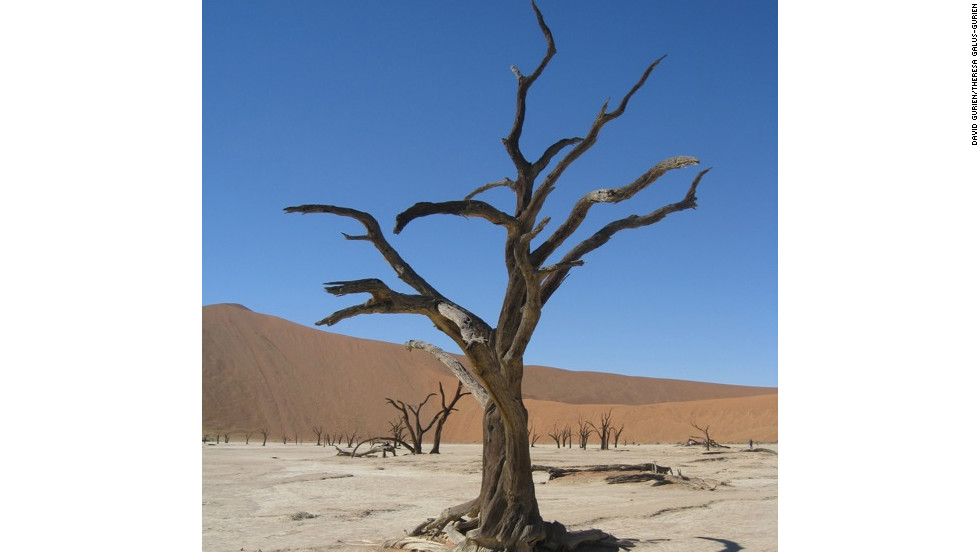 "The dead acacia, or ""camel thorn,"" trees are said to be as old as 900 years."