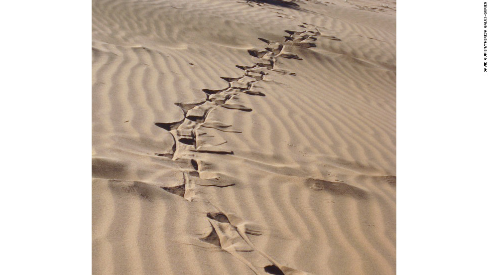 Grasses grow, providing food for springbok, gemsbok and oryx. Here oryx tracks leave deep wells in the soft sand.
