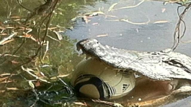 sc  alligator eats soccer ball_00002002
