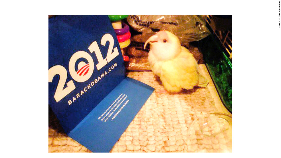"Tina Gangidine says her pet lovebird, The Bird, H.R.H. (Her Royal Highness), is a ""political bird."""