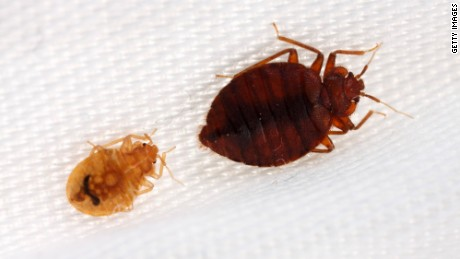 Thick-skinned bedbugs are beating bug spray