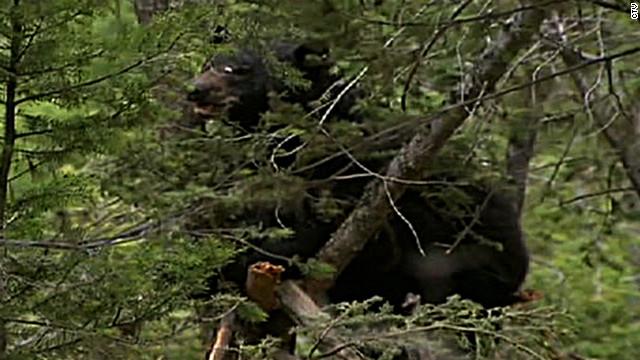 Dead man eaten by bear  identified