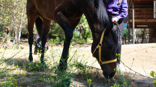 Prize-winning horse saved from slaughter