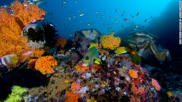Coral reefs: Pulse of the oceans