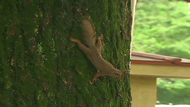 ctw japan zoo hunts for escaped squirrels_00003501