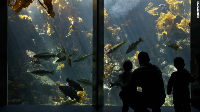 A couple peer inside one of many aquariums at the Oceanopolis