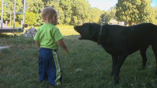 dnt mi dog saves toddler_00000628
