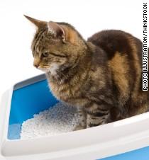 Americas Best Cat Litter