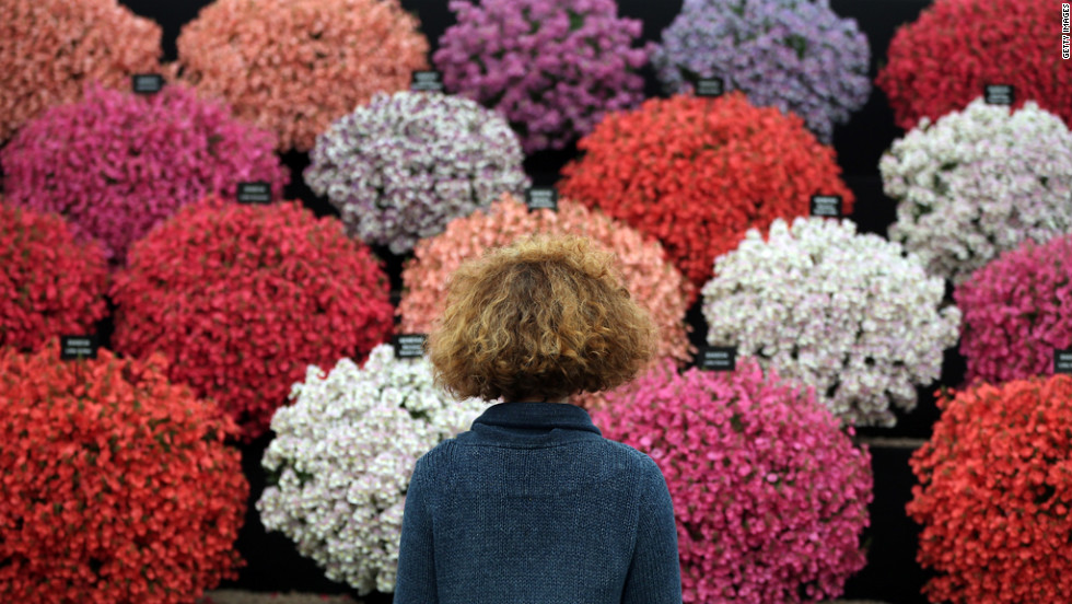 A visitor looks at a display at the Hampton Court Palace Flower Show in London on Monday, July 2. Billed as the biggest gardening show in the United Kingdom, the show opens to the public Tuesday and runs through Sunday.