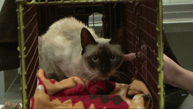 Lost cat found after four years