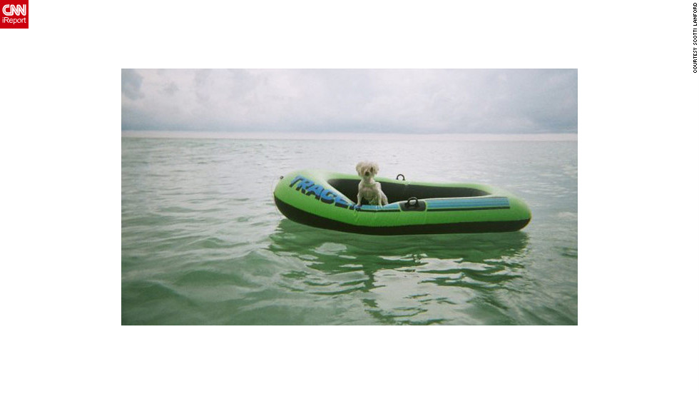 "Flossy, a 5-year-old Maltese, <a href=""http://ireport.cnn.com/docs/DOC-810498"">captains a boat raft</a> off the shores of Destin, Florida."