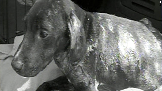Three dogs have been set on fire in the Philadelphia area since June.