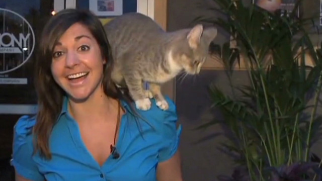 hln didonato cat interrupts reporter live shot_00001317