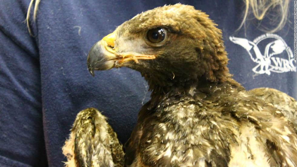Phoenix also had burns to his feet and around his beak.