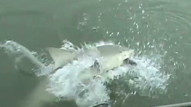 Watch shark surprise people fishing