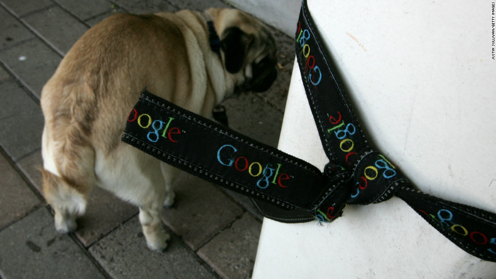 Dogs like this pug are welcomed at the offices of Google, in Mountain View, California.