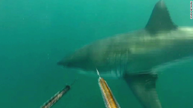 Face-to-face with a great white shark