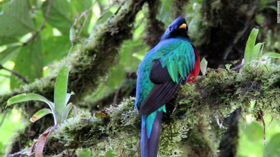 Our guide in Monteverde Cloud Forest Reserve, recommended by our hotel, was a master bird caller. We were lucky to see a resplendent quetzal.