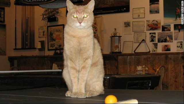 Stubbs the cat  has been mayor of Talkeetna, Alaska, for 15 years, since it was a kitten.