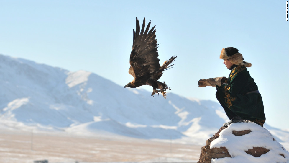 While the golden eagle population remains stable in Kazakhstan, saker falcon numbers are rapidly declining because of the black market trade.