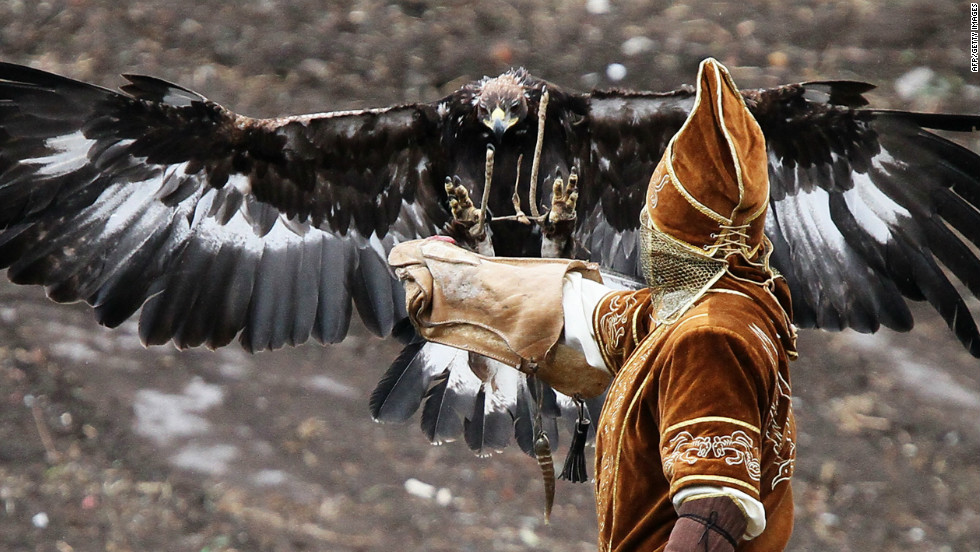 A Kazakh falconer holds his golden eagle during a festival of traditional sports in the East Kazakhstan's city of Ust-Kamenogorsk. Golden Eagles have been used in falconry since the Middle Ages.