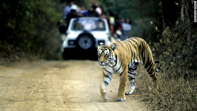 The Supreme Court of India has banned tourism in tiger parks such as this one in Rajasthan, India.