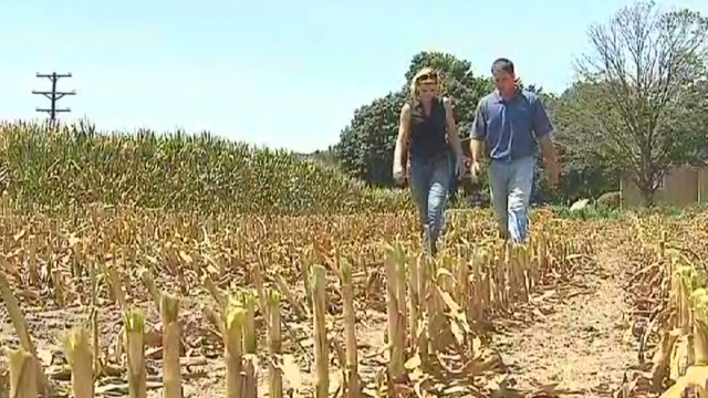 Farmers looking beyond drought