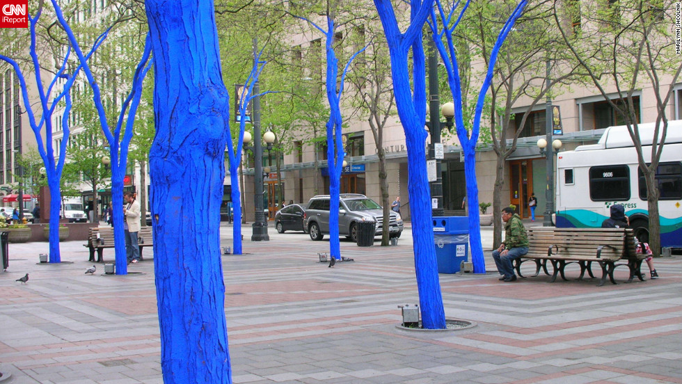 """The Blue Trees"" is a part of a <a href=""http://ireport.cnn.com/docs/DOC-795836"">public art installation in Seattle, Washington</a>, in the downtown area. The art installation is by Australian artist, Konstantin Dimopoulos."