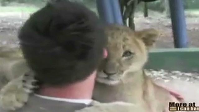 vo lion cub hugs_00000712