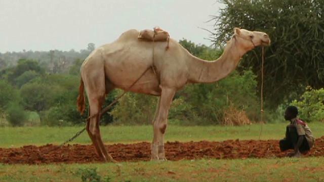 exp erin camel report mali_00011027