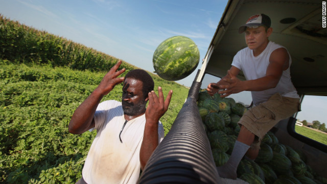 Migrant workers harvest watermelon last month near Vincennes, Indiana.