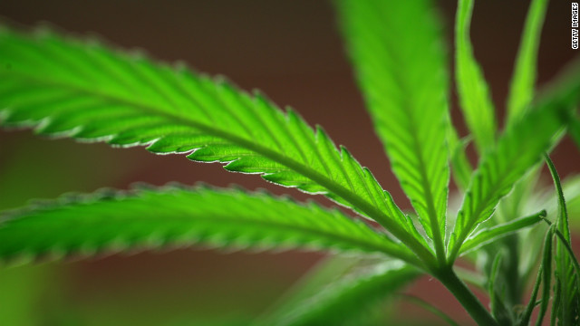 Flood of applicants for 'pot czar'