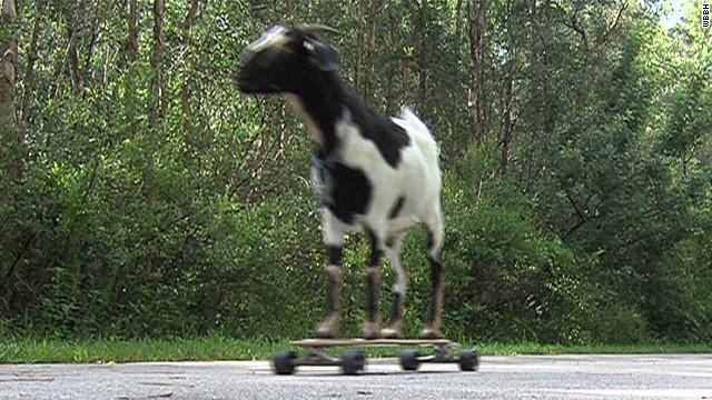 pkg skateboarding goat sets world record_00001030