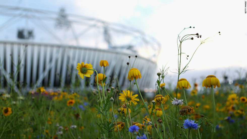 They provide an oasis of calm in the heart of the bustling Olympic Park, which has welcomed thousands of sports fans in recent weeks.